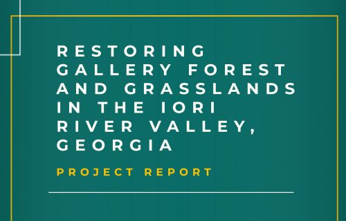Assessment Report of Iori River Gallery Forest